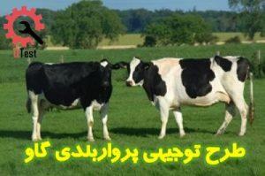طرح توجیهی پرواربندی گوساله گوشتی
