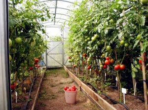 طرح توجیهی پرورش صیفی جات گلخانهای