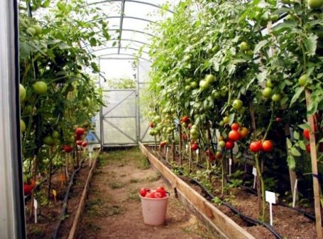 accumulation greenhouse advice for home gardeners to grow vegetables 2 875 کیوتست